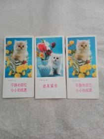 可爱的小猫3张