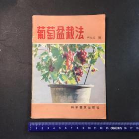 葡萄盆栽法