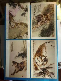 明信片,老虎4张