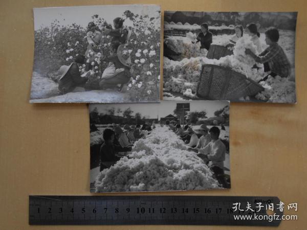 资料室散出,老照片【80年代,农场棉花大丰收,3张】