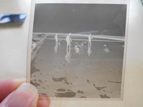 资料室散出,老底片【80年代,农场盐场,2张】