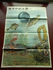 中学适用自然地理挂图第二组(9—8)海洋中的生物(二) 55年一版一印