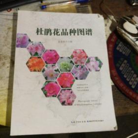 杜鹃花品种图谱