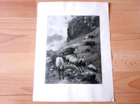 20世纪初平版印刷《山谷中奔逃的羚羊》(Antelope running in the valley)  -- 后附纸尺寸32*25厘米,版画纸张尺寸23*18厘米