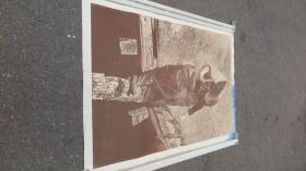 四川美术家协会常务理事  徐匡  版画作品一幅 正反面印制  150*108厘米 厚卡纸印制  带徐匡的水纹暗记纸1