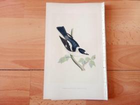 1866年木口木刻版画《欧洲大陆鸟类图谱:雀形目--鹟科--白领姬鹟》(WHITE-COLLARED FLYCATCHER)-- 物种资料来自英国艾塞克斯郡自然医学学会和科尔切斯特医院解剖实验室 -- 英国格龙布里奇(Groombridge)出版社出版发行 -- 纸张尺寸25*15厘米 -- 手工上色,高品质,非常精美