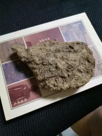 神龟化石一个   多年珍藏