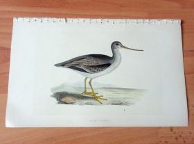 1866年木口木刻版画《欧洲大陆鸟类图谱:鸻形目--鹬科--翘嘴鹬》(TEREK GODWIT)-- 物种资料来自英国艾塞克斯郡自然医学学会和科尔切斯特医院解剖实验室 -- 英国格龙布里奇(Groombridge)出版社出版发行 -- 纸张尺寸25*15厘米 -- 手工上色,高品质,非常精美