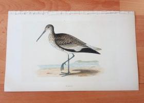 1866年木口木刻版画《欧洲大陆鸟类图谱:鸻形目--鹬科--斑翅鹬属--半蹼白翅鹬》(WILLET)-- 物种资料来自英国艾塞克斯郡自然医学学会和科尔切斯特医院解剖实验室 -- 英国格龙布里奇(Groombridge)出版社出版发行 -- 纸张尺寸25*15厘米 -- 手工上色,高品质,非常精美,后附实物照片
