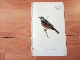 1866年木口木刻版画《欧洲大陆鸟类图谱:雀形目--鹀科--鹀属--蓝头圃鹀(鸣禽)》(CRETZSCHMAER'S BUNTING)-- 物种资料来自英国艾塞克斯郡自然医学学会和科尔切斯特医院解剖实验室 -- 英国格龙布里奇(Groombridge)出版社出版发行 -- 纸张尺寸25*15厘米 -- 手工上色,高品质,非常精美,后附实物照片