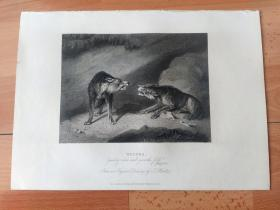 """1840年钢版画《发情中》(WOLVES,""""Gnarling which shall qnaw the first"""")-- 出自英国动物画家,托马斯·休伊特(Thomas Howitt)的油画作品 -- 《英国艺术画廊》出版 -- 版画纸张28*20厘米"""