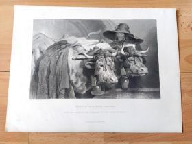 1876年钢版画《杜松子酒的芬芳》(OXEN AT THE TANK:GENEVA)-- 出自19世纪英国维多利亚时期著名画家,埃德温·兰德希尔爵士(Edwin Landseer)的绘画作品,他以动物作品著称并得到维多利亚女王青睐 -- 金酒,又名叫杜松子酒(geneva)或琴酒,最先由荷兰生产,在英国大量生产后闻名于世 -- 选自当年艺术日志 -- 版画纸张32*24厘米