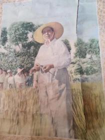 解放初期,天津德裕公制一一我们敬爱的领袖毛主席(稀见图案,特大幅)